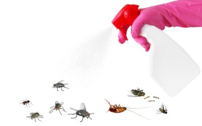 DIY pest control? Read this first!