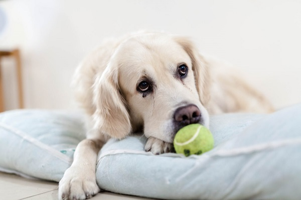 Dog fleas on humans. How pets can bring home pests?