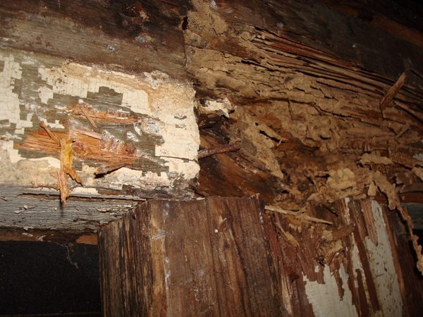 Do you really need a pre purchase timber pest inspection?